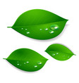 realistic green leaves with water drops isolated vector image