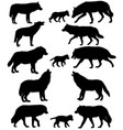 silhouettes of wolves and wolf-cubs vector image vector image