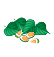 Areca Nuts and Betel Leaves on White Background vector image vector image