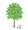 fig tree vector image vector image