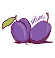 hand drawn plum sketch style vector image vector image