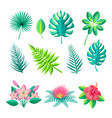 leaves and flowers collection vector image vector image