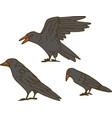three big black crow set vector image