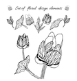 set of floral elements vector image