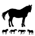 horse silhouette set vector image vector image