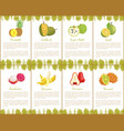 pineapple and jackfruit fruits posters set vector image vector image