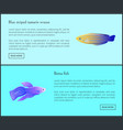 betta fish blue tamarin set vector image vector image