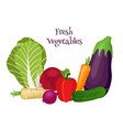 fresh vegetables - bok choy eggplant carrot vector image vector image