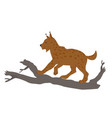 lynxcute animals - bobcat for children vector image