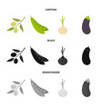 olives on a branch peas onions eggplant vector image vector image