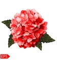 red realistic hydrangea lavender vector image
