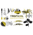 set tropical silhouettes bushes branches vector image