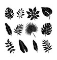 tropical leaves silhouettes set jungle palm vector image