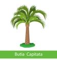 Butia Capitata cartoon tree vector image vector image