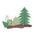 forest pine tree bushes foliage vegetation nature vector image vector image