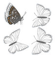 set white butterflies lycaenidae isolated on vector image vector image