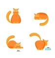 Cute Orange Cat Set vector image