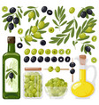 cartoon olive black and green olives olive tree vector image vector image