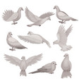 flat set of dove bird with small head vector image