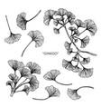 ginkgo flower and leaf hand drawn botanical vector image vector image
