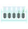 stages of plant growth in test-tube vector image vector image