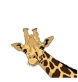 the head of a giraffe vector image vector image