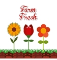 farm fresh concept icon vector image