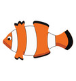 a beautiful white and orange clown fish for the vector image vector image