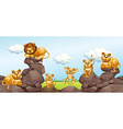 Lion family in the field vector image