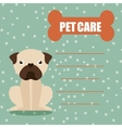 pet care vector image vector image