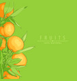 ripe fresh oranges vector image vector image