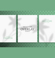 shadow overlay plant mockup a4 paper sheets vector image