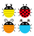 beetle lady bug set insect animal collection vector image