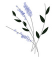 simple of violet flowers with black leaves on vector image vector image