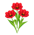 Spring flowers tulips on white background vector image vector image