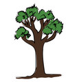 tall tree with green leaves on white background vector image vector image