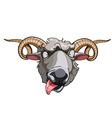 cartoon head horned sheep vector image