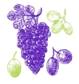 Grape Hand Draw Sketch vector image vector image