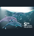summer card with dolphins under water sea vector image