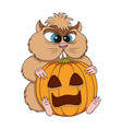 angry hamster sits with a pumpkin vector image vector image