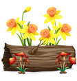 daffodil flowers and mushrooms on white background vector image
