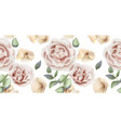 delicate pink roses watercolor background vector image vector image