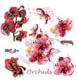 set orchids drawn in watercolor style vector image vector image