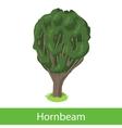 Hornbeam cartoon tree vector image vector image