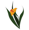 yellow flower with several leaves on white vector image vector image