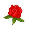 floral botanical flower ornament red rose vector image vector image