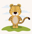 white background with color scene cute tiger vector image vector image