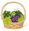 wine basket vector image vector image