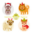 puppy dog breeds icon set - yorkshire terrier vector image vector image