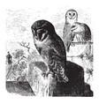 barn owls vintage vector image vector image